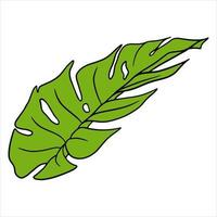 Tropical plants exotic carved green leaf in cartoon style vector