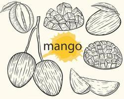 Mango set vector Sketch