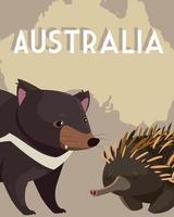 erizo y el diablo de tasmania mapa australiano animal fauna vector