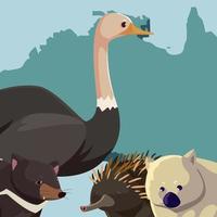 avestruz wombat erizo continente australiano mapa animal fauna vector