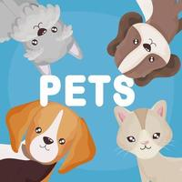 funny pets cats and dogs cartoon domestic animals vector