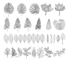 Botanical wall art element vector collection Vector illustration