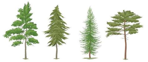 Collection Beautiful tree Realistic on a white background Vector EPS 10