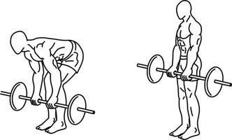 Deadlift Exercises and training with weights vector
