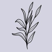 Ilustración de vector de arte de línea de flor silvestre doodle de hoja botánica