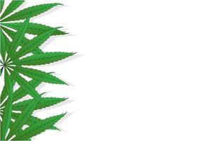 Cannabis Sativa leaves on white background Marijuana illustration  background with copyspace vector