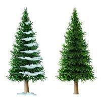 Realistic vector pine tree set isolate