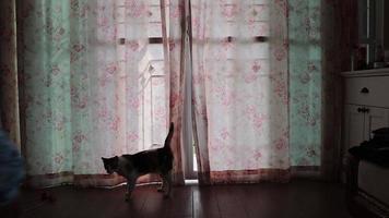 trasero trasero niña feliz abriendo cortinas de ventana video