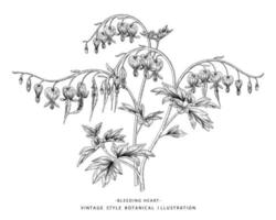 Branch of Bleeding Heart with flower Seed and pod Hand Drawn Sketch Botanical Illustrations vector
