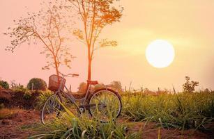hermosa bicicleta vintage en el campo foto