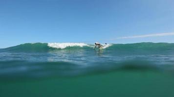 surfare rider våg, hawaii video