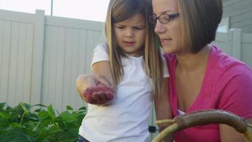 mor och dotter som planterar frön i trädgården video