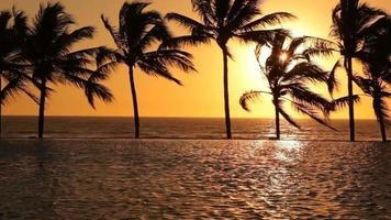 tropische palmbomen zwaaien in de wind bij zonsondergang video