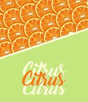 citrus fruit poster with lettering and oranges pattern vector