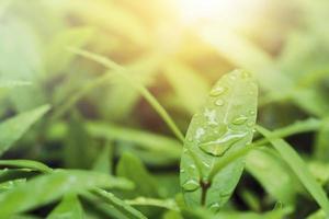Gotas de lluvia sobre hojas verdes con fondo de naturaleza de luz solar foto