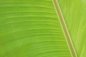 Macro banana foliage texture background photo