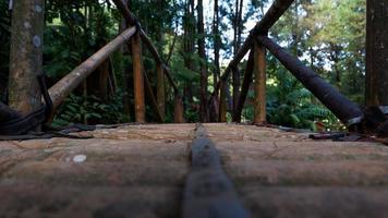 foto de un puente de bambú en un bosque de pinos