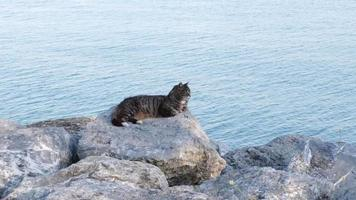 Adult tabby stray cat is lying down on rocks beside sea at Istanbul video