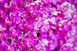 fondo rosa rosa foto