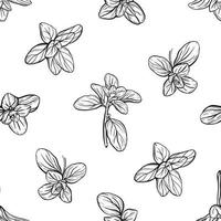 Basil Seamless Pattern. Italian herbs.A sprig of marjoram. Basil is a fragrant and fragrant seasoning. Hand-drawn illustration vector