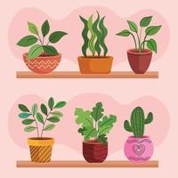 paquete de seis plantas de interior en macetas de cerámica sobre estantes vector