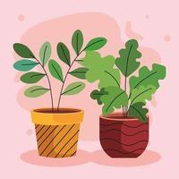 paquete de dos plantas de interior en macetas de cerámica vector