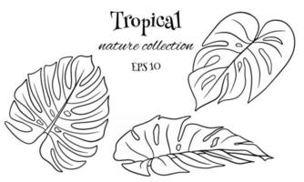 Tropical set with exotic carved palm leaves in line style vector