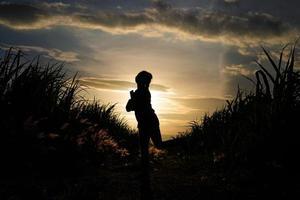 Granjero mujer silueta de pie en la plantación de caña de azúcar en el fondo atardecer por la noche foto