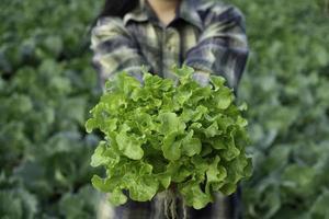 joven agricultor sostiene roble verde vegetal foto