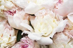 flores de peonía como fondo natural foto