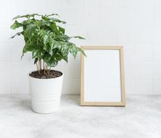 Sprouts of coffee plant tree in a pot photo