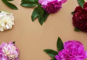 Pink peony flowers as a border photo
