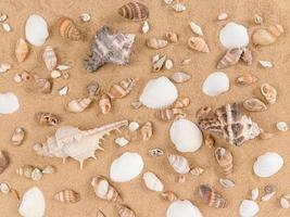 Mix of sea shells on sand background photo