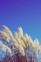 white flower plant in spring season photo
