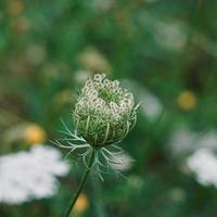 beautiful green flower plant in spring season photo