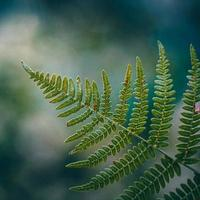 green fern leaves in the nature photo