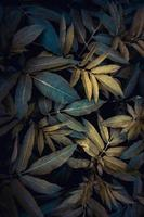 green plant leaves in springtime photo
