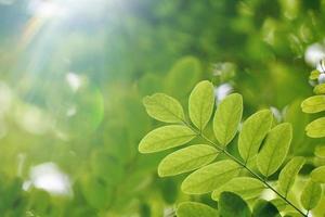green tree leaves in spring season photo