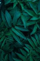green plant leaves in the nature in spring season photo