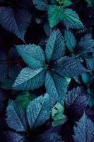 blue plant leaves in the nature in spring season photo