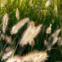 dry flower plants in the nature photo