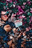 brown dry leaves on the ground in autum season photo