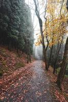 road in the forest in autumn season photo