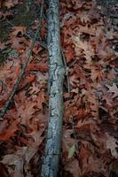 dry brown leaves and tree branches photo