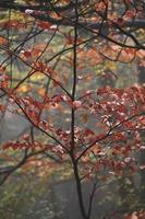 trees in the forest in autumn season photo