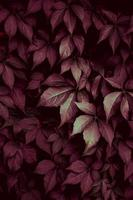 red plant leaves in autumn season photo