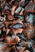 dry brown leaes and pinecones on the ground photo