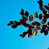 green tree leaves and blue sky photo