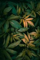 green plant leaves textured background photo