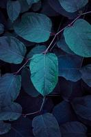 blue plant leaves textured background photo